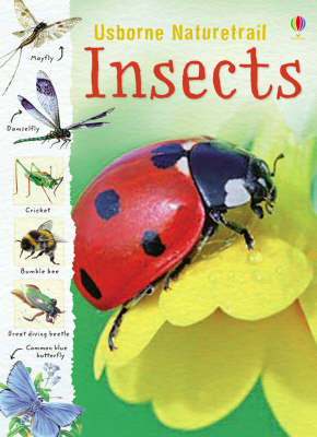 Nature Trail: Insects