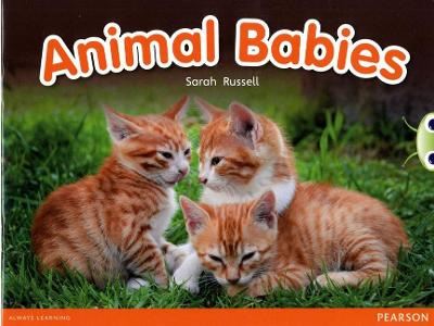 Bug Club Non-fiction Red B (KS1) Animal Babies