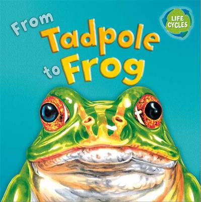 Lifecycles: From Tadpole To Frog